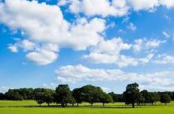 夏季臭氧污染防治攻坚行至中场 95个城市治理成效如何
